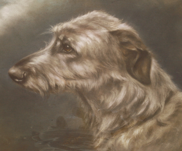 D Tucker (20th century) STUDY OF A LURCHER