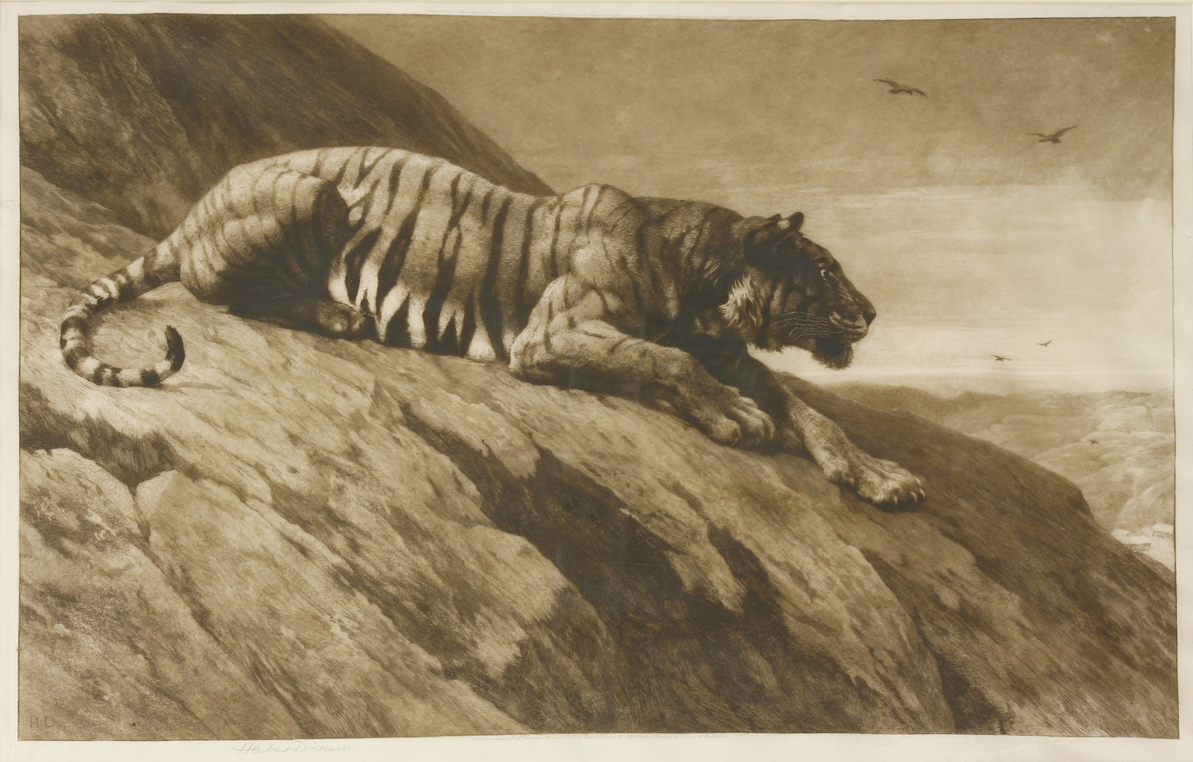 Herbert Thomas Dicksee RE (1862-1942) THE WATCHER ON THE HILL, A TIGER