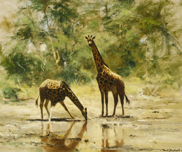 David Shepherd - The Watering Hole Giraffes