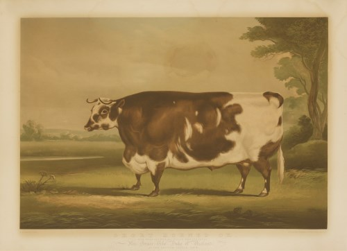 Lot 155-After William Henry Davis (1783-1865) SHORT-HORNED OX Chromolithograph