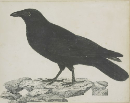 Lot 337-Robert Mitford (1781-1870) A CARRION CROW Signed l.r.