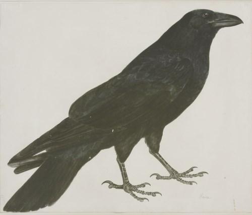 Lot 342-Prideaux John Selby (1788-1867) A RAVEN Signed l.l.