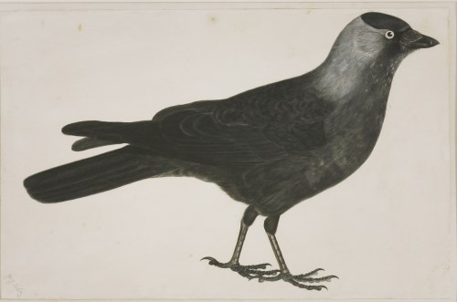 Lot 345-Prideaux John Selby (1788-1867) A JACKDAW Signed l.l.