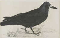 Lot 341-Robert Mitford (1781-1870) A ROOK Signed and inscribed l.l.