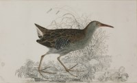 Lot 338-Robert Mitford (1781-1870) A WATER RAIL Signed l.l.