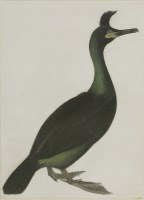 Lot 340-Robert Mitford (1781-1870) A CORMORANT Signed l.l.