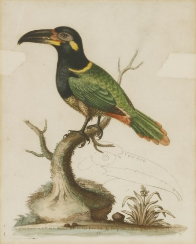 Lot 700-George Edwards (1694-1773) 'THE BILL-BIRD' Hand-coloured etching from 'A Gleaning of Natural History...' 24 x 19cm; and eight others of Toucans