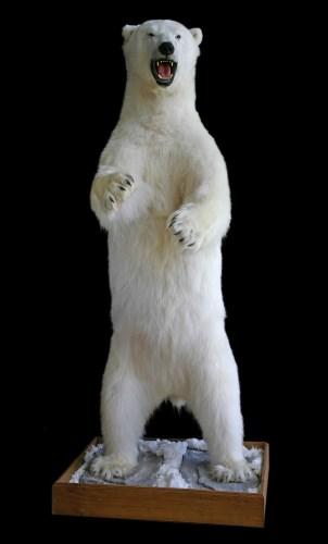 198 - POLAR BEAR