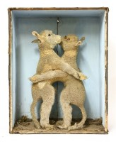 Lot 97 - A PAIR OF CONJOINED LAMBS