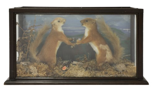 Lot 13-SQUIRRELS DRINKING