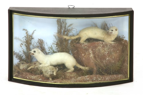 Lot 12-STOATS