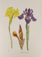Lot 13-*Dame Elizabeth Blackadder RA RSA (b.1931) IRISES Lithograph printed in colours