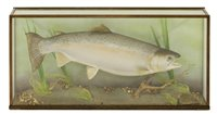 Lot 72-Taxidermy: A mounted salmon trout