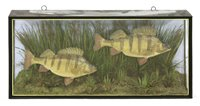Lot 73-Taxidermy: two large perch