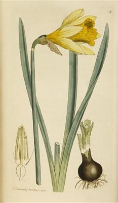 Lot 60 - Sowereby, James: English Botany