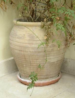 Lot 19 - A group of six various plants in pots