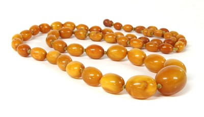 Lot 41 - A single row graduated olive-shaped butterscotch amber bead necklace