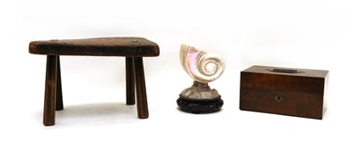 Lot 41 - A shell mounted on a hardstone rock mount and hardwood base