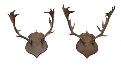 Lot 80 - Two pairs of antlers