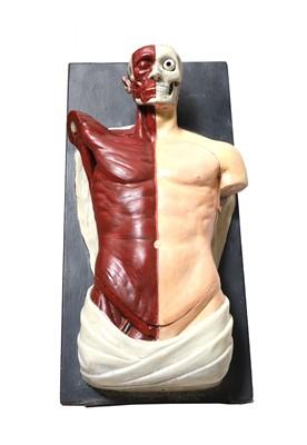 Lot 422 - An Adam,Rouilly anatomical torso