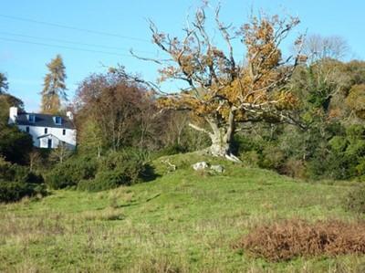 Lot 16 - Little Boreland Holiday Home, SW Scotland (Dumfries & Galloway)