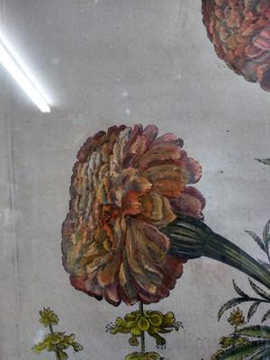 Lot 25 - Basilius Besler (German, 1561-1629)