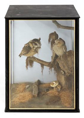 Lot 138 - Taxidermy: Indian scops owl (Otus bakkamoena)