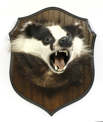 Lot 118 - Taxidermy: a badger mask