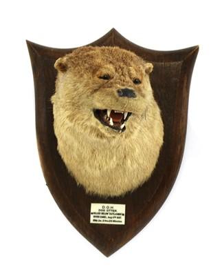 Lot 116 - Taxidermy: A dog otter mask