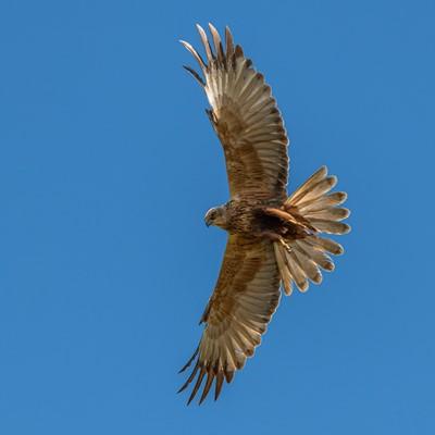 Lot 29 - Guided birdwatching at Lakenheath Fen