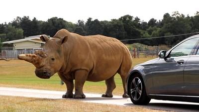 Lot 28 - Entry into Woburn Safari Park