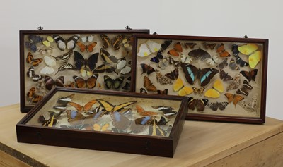 Lot 382 - Three cases of preserved butterflies